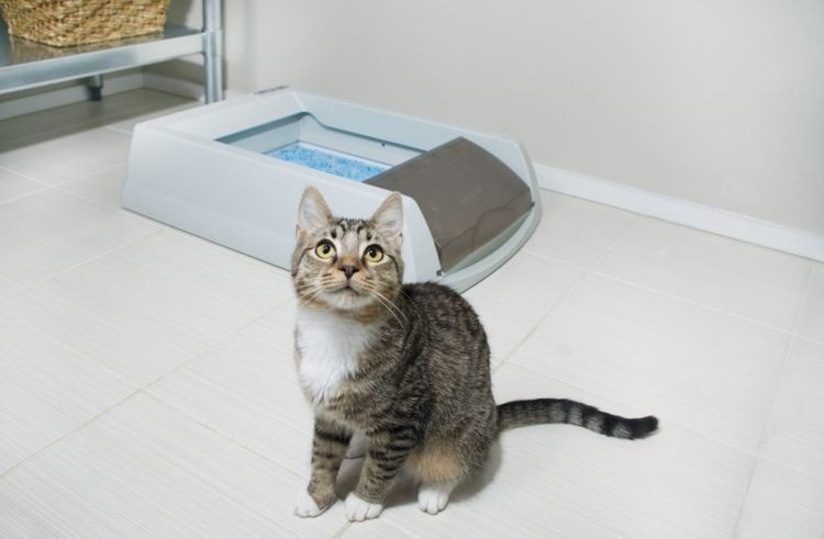 Кошка возле лотка