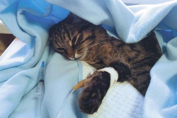 Кошка на лучевой терапии