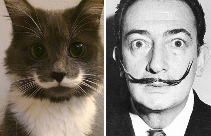 Кот похож на Сальвадора Дали