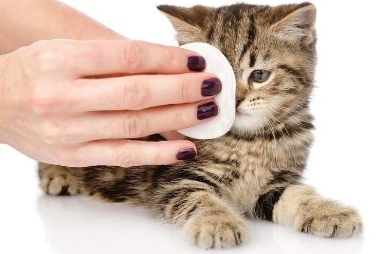 Протирание глаз котенку