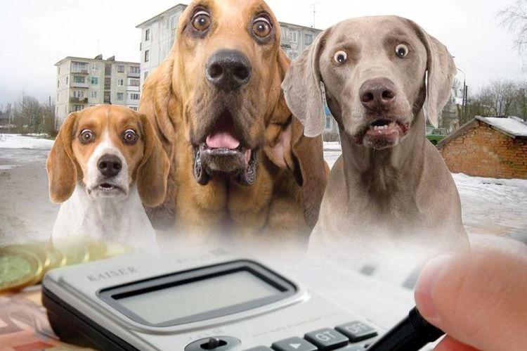 Налог на животных