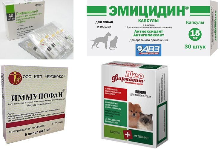 Препараты для лечения питомникового кашля