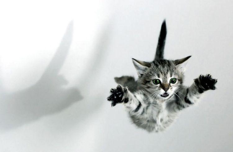 Котенок прыгает