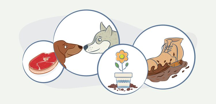 Способы заражения собаки глистами