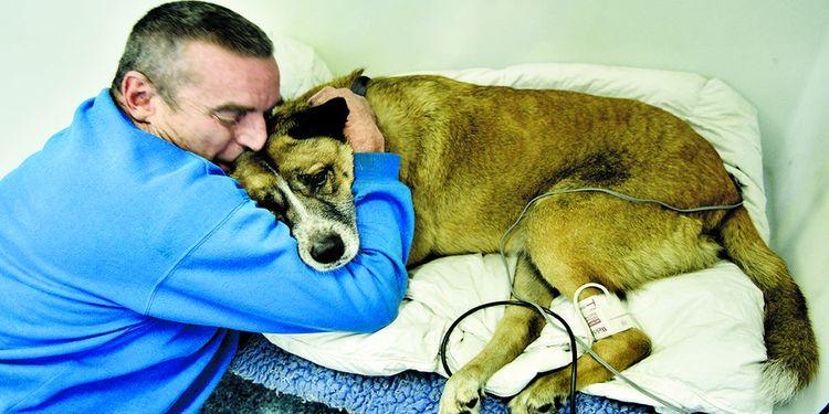 Собака с хозяином у ветеринара
