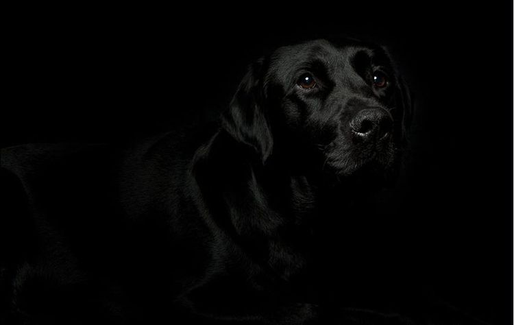 Пес в темноте