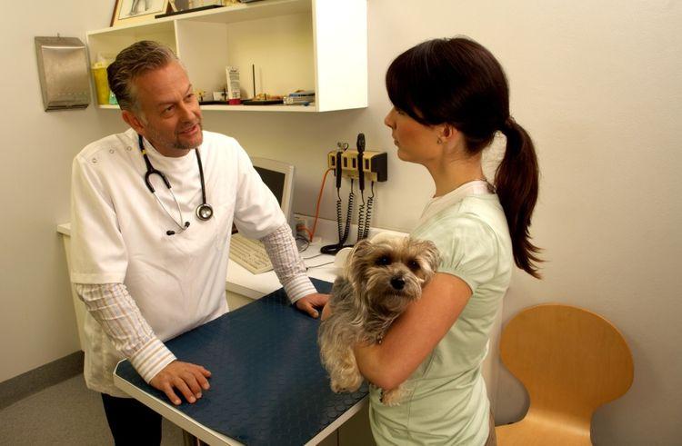 Обследование собаки у ветеринара