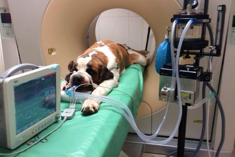 МРТ собаке