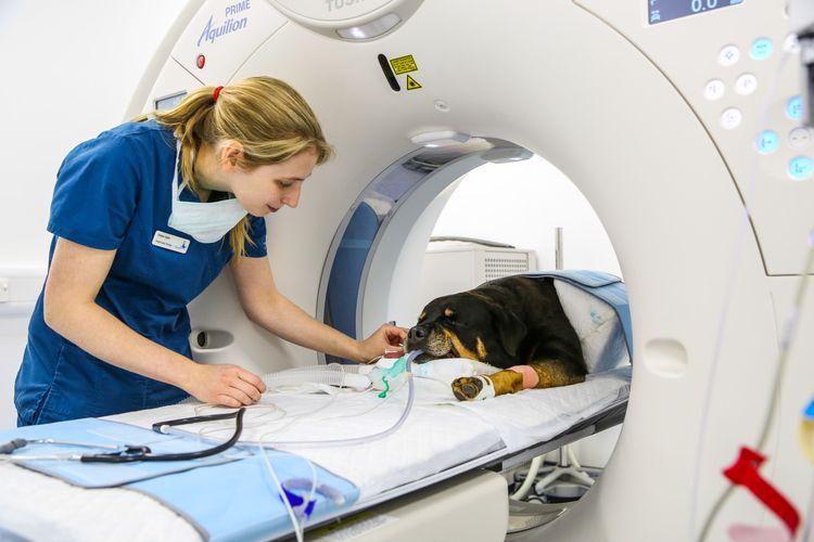 МРТ головы собаке