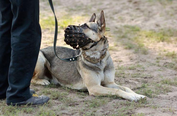 Собака в наморднике