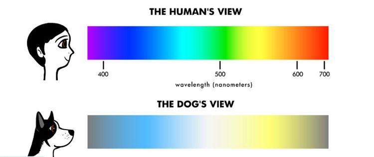 Как собаки видят цвета