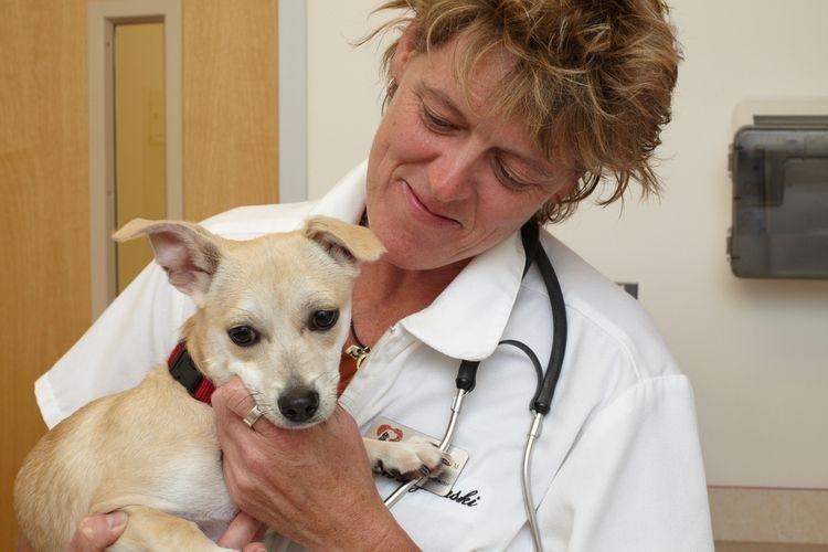 Осмотр собаки у ветеринара