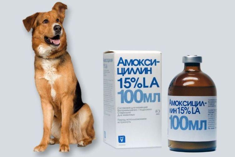 Амоксициллин для собак