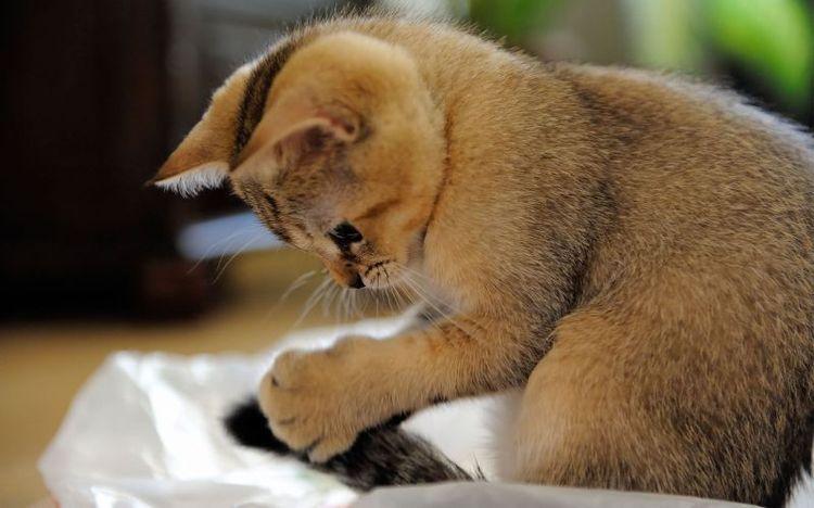 Котенок играет хвостом