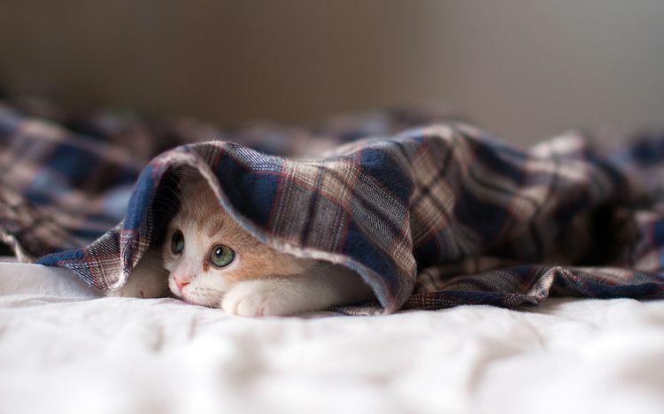 Котенок прячется