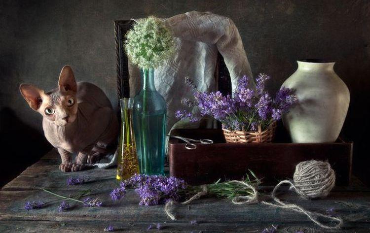 Кот и лаванда