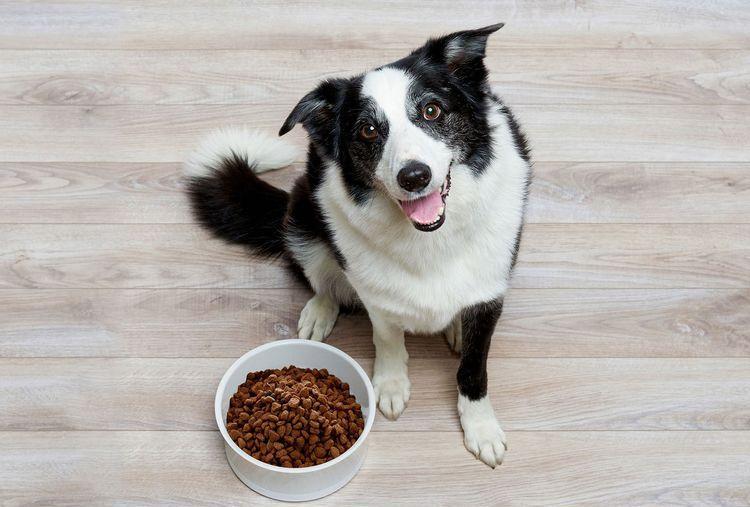 Собака и сухой корм