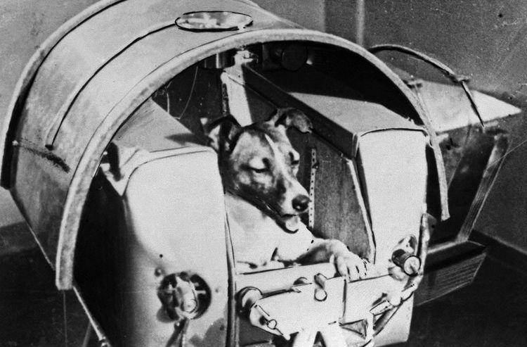 Подготовка собаки к полету в космос