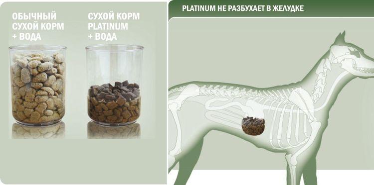 Сравнение корма Platinum с обычным сухим кормом