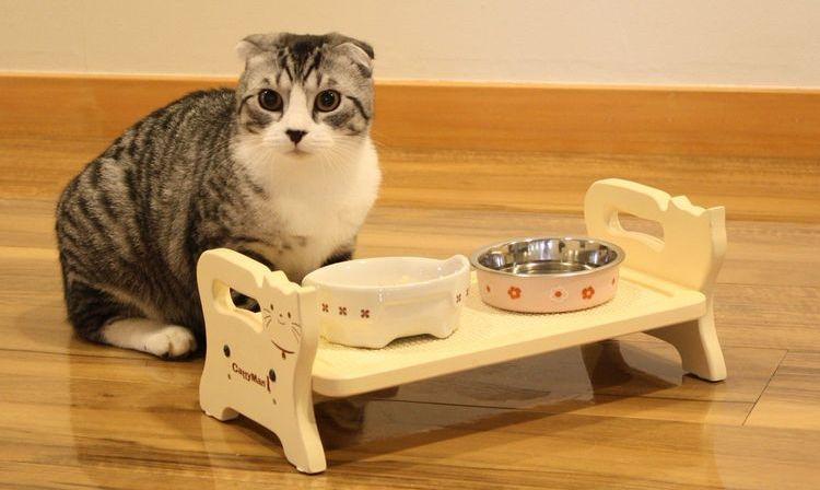 Кошка у мисок с едой