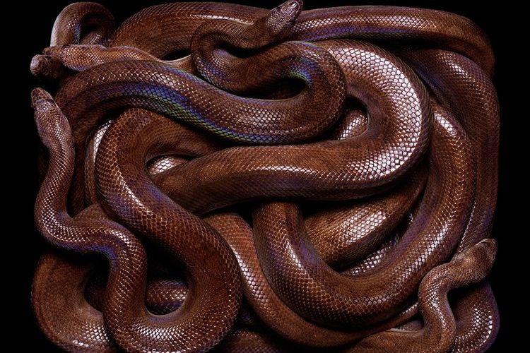 Клубок змей