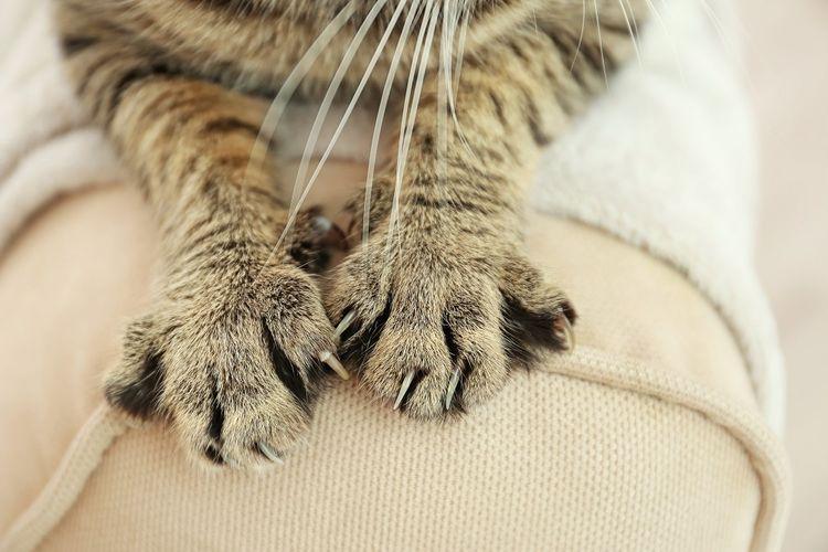 Кошка выпустила когти