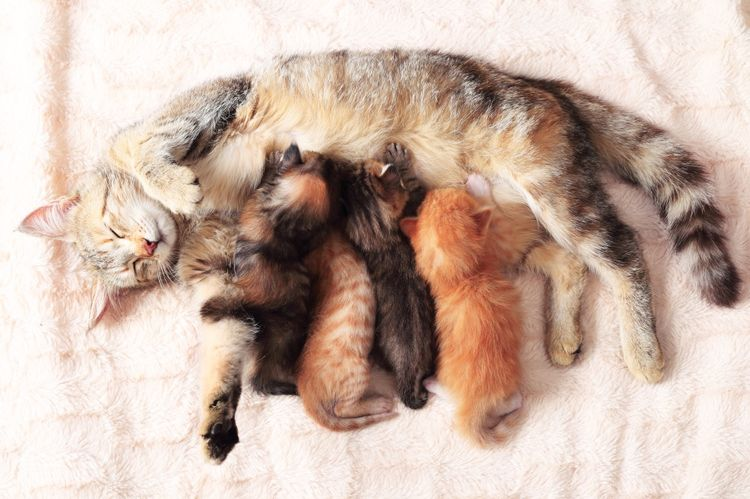 Выкармливание котят