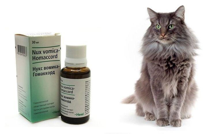Слабительное для кошек