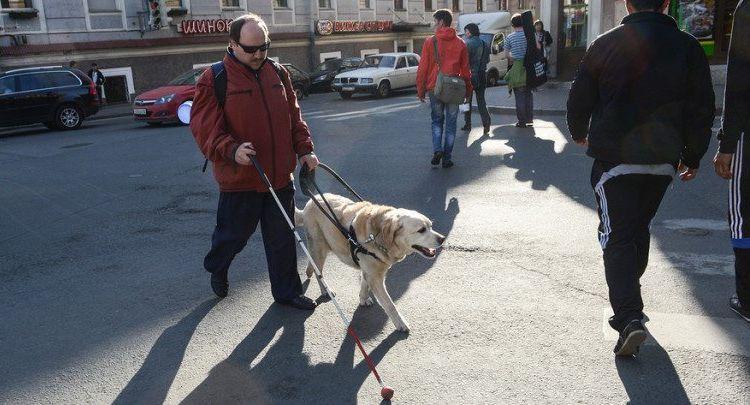 Собака-поводырь с хозяином