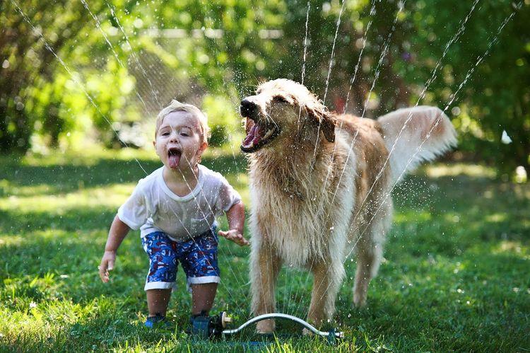 Ребенок и ретривер играют на газоне