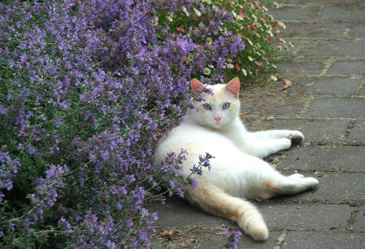 Кот с растениями