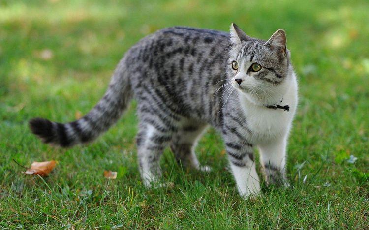 Кошка гуляет