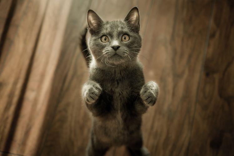 Кот просит есть