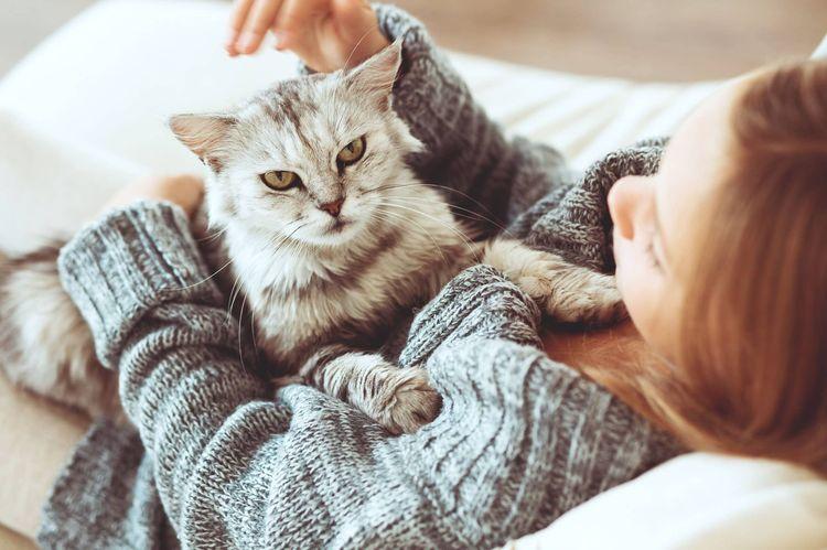 Хозяйка гладит кота