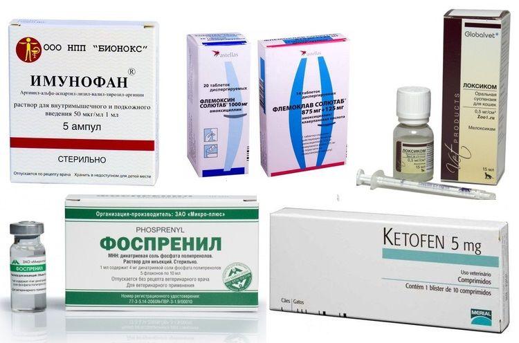 Лекарства для лечения кальцивироза у кошек