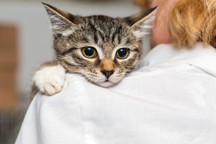 Кошка с хозяйкой