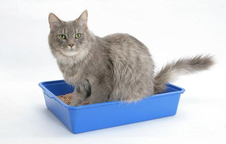Серый кот в лотке