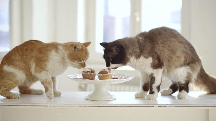 Кошки едят сладкое