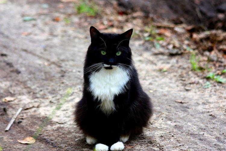 Уличный черный кот