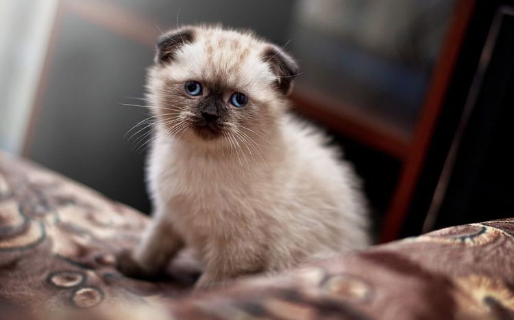 Котенок сидит на кровати