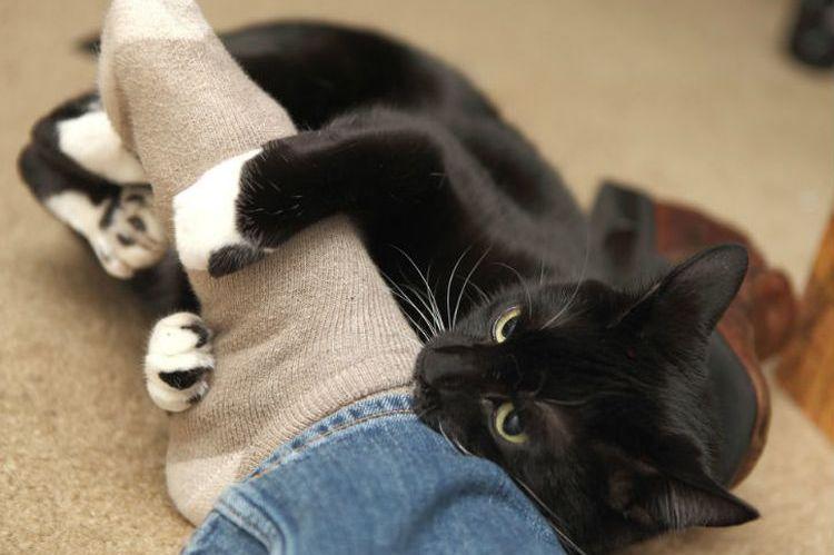 Кот в ногах хозяина