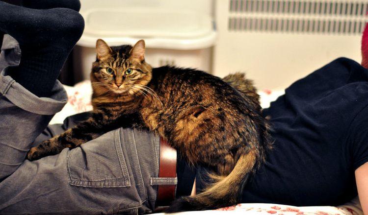 Кот лежит на ногах своего хозяина