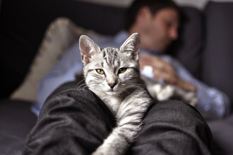 Серый кот на ногах хозяина