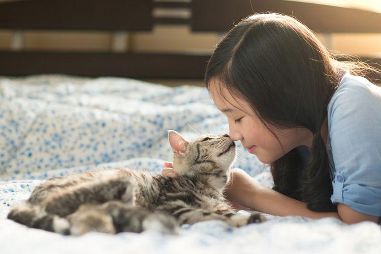 Кошка нюхает нос хозяйки