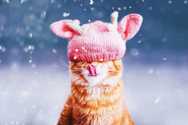 Милый кот в розовой шапке
