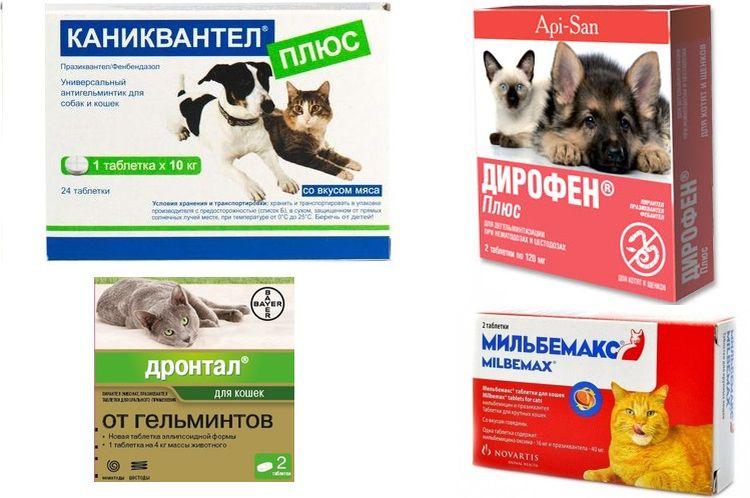 Препараты для лечения аскарид у котов