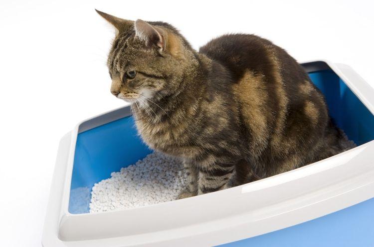 Кошка в лотке