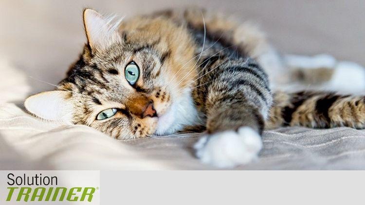 Корм для кошек Тренер (Trainer)