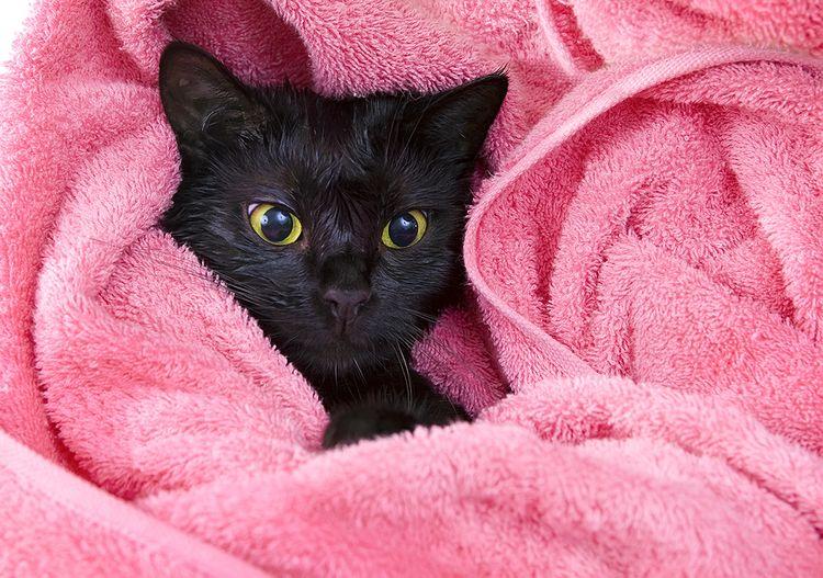 Черный кот в полотенце