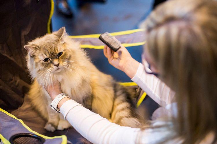 Специалист по домашним кошкам